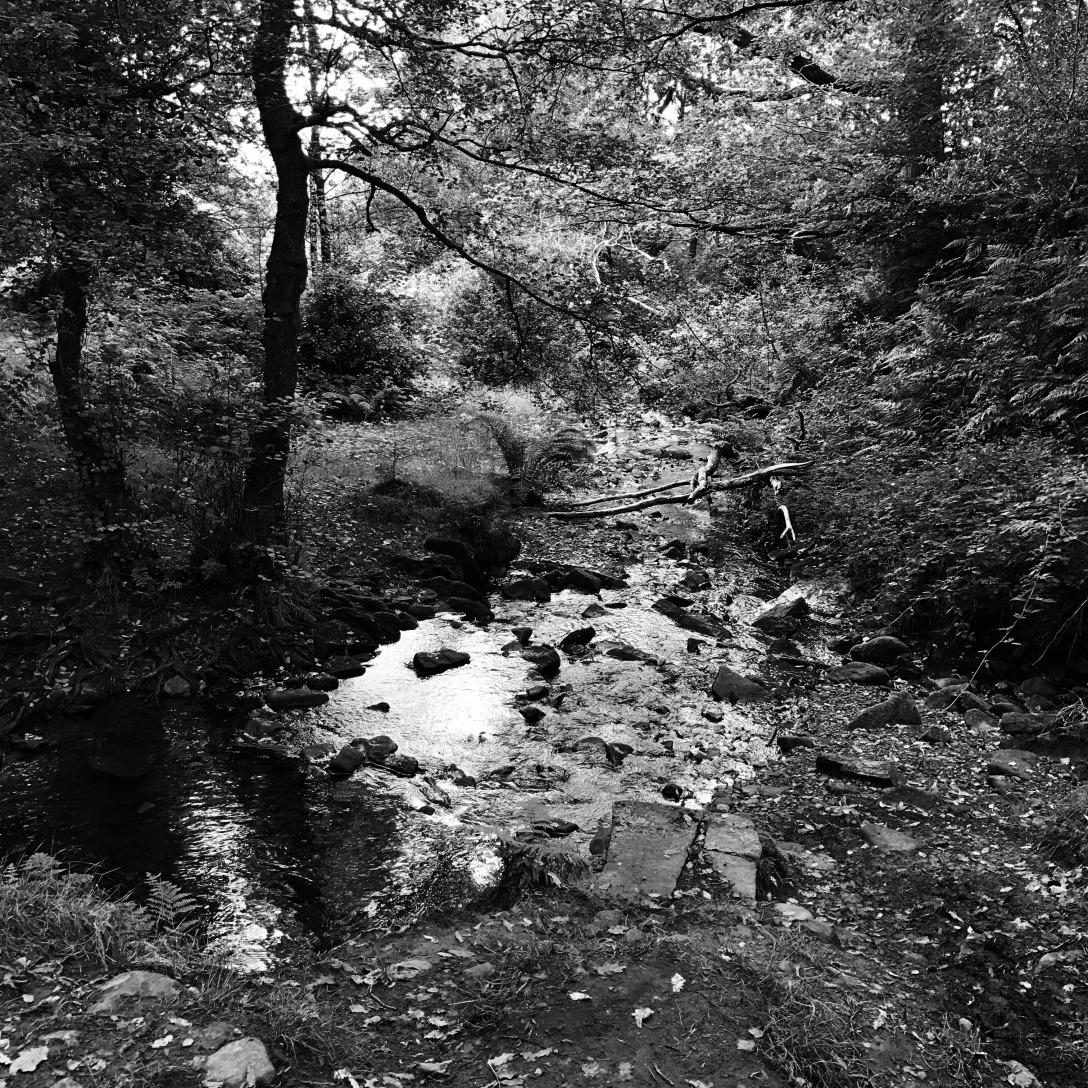 Buckden Woods